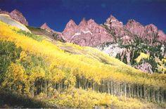 Aspen by Maroon Bells, Colorado