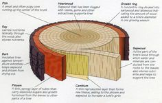 Cross section of tree trunk.