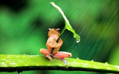 Funny pictures about A Little Frog Under His Umbrella. Oh, and cool pics about A Little Frog Under His Umbrella. Also, A Little Frog Under His Umbrella photos. Vida Animal, Mundo Animal, Animal Fun, Baby Animals, Funny Animals, Cute Animals, Nature Animals, Wild Animals, Beautiful Creatures