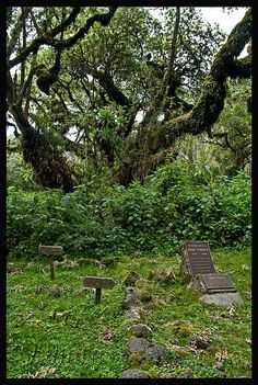 Dian Fossey's Grave Volcanoes NP Dian Fossey's grave next to that of Digit, the Mountain Gorilla killed by poachers during her sojourn.
