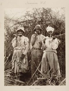 Sugar workers on a Jamaican plantation mid-19th century