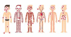 Illustration of Stylized female body anatomy chart: skeletal, muscular, circulatory, nervous and digestive systems.