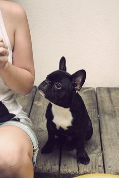 French Bulldog. Cute!