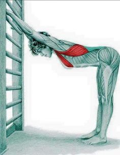 So what kind of muscles do you stretch when you do yoga? Look at these stretching exercises with pictures do find out - Vicky Tomin is a Yoga exercise Bikram Yoga, Kundalini Yoga, Yoga Meditation, Fitness Workouts, Yoga Fitness, Latissimus Dorsi, Muscle Anatomy, Bad Posture, Stretching Exercises