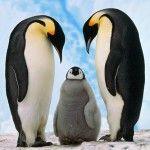 Mit hozott a Google Pingvin?
