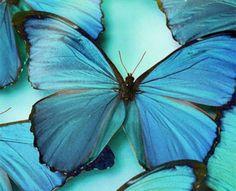 О бирюзовом цвете, трендах и внимании мужчин ;) - Ярмарка Мастеров - ручная работа, handmade