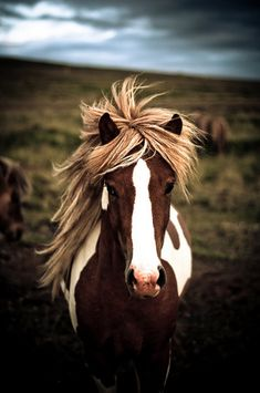 -I'm sorry but I laugh every time I see a horse now; can't seem to get the profile of the horse's mane billowing in the wind during the War Horse preview out of my head.