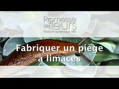 Promesse de Fleurs - YouTube Comment Planter, Planters, Youtube, Art, Gardens, Veggie Gardens, Furniture, Planter Boxes, Kunst