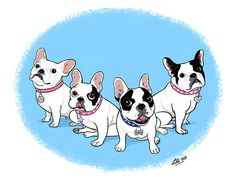 French Bulldogs, illustration by By Lili Chin.