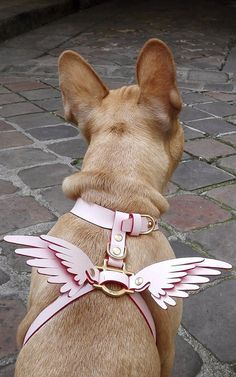 Shop for Wings Leather Dog Harness by Niels Peeraer at ShopStyle. Pet Dogs, Dogs And Puppies, Dog Cat, Animals And Pets, Cute Animals, Frozen Dog Treats, Bullen, Dog Clothes Patterns, Pet Clothes