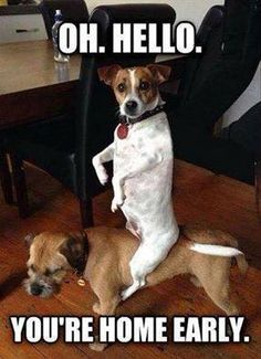 Funny Dogs Party animals (again) Oh Hi There Master // funny pictures - funny photos - funny images - funny pics - funny quotes - Funny Animal Pictures, Funny Photos, Funny Images, Funny Animals, Cute Animals, Animal Pics, Meme Pictures, Animals Dog, Funny Dog Memes