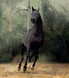 Gorgeous Arabian