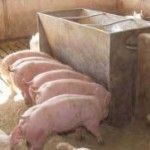 A nutritionist with the Prairie Swine Centre in Saskatchewan, Canada says, at a time when feed grain prices are rising and hog prices are not, pork producers can reduce their feed costs by substituting a variety of alternative ingredients into the diet.