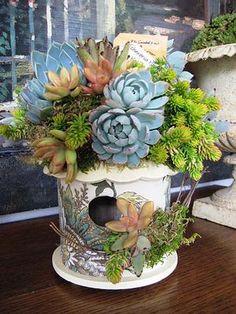 Succulents on a birdhouse