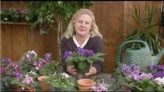 Video About How To Care For African Violets To Avoid Problems