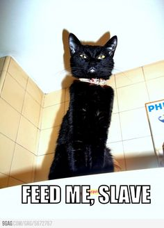 Feed me, slave. This makes me think of all my friends who have cats. This is similar to how they describe their cats. lol