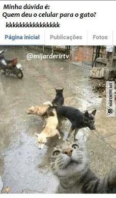 best selfie till date! Memes Estúpidos, Memes Status, Top Memes, Best Memes, Jokes, Funny Cats, Funny Animals, Cute Rats, Bad Cats