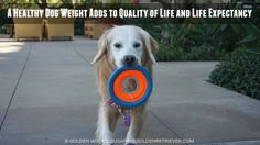 Simple Steps to Healthy Dog Weight Loss #PerfectWeight #ad