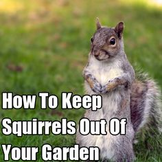 Learn how to keep squirrels out of your garden this is - How to keep squirrels from digging in garden ...