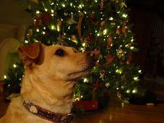 Paco Christmas 2012