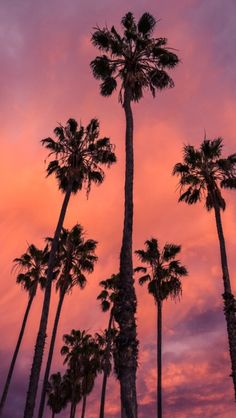 57 Super ideas for vintage wallpaper iphone palm trees Tree Sunset Wallpaper, Coral Wallpaper, Tree Wallpaper Iphone, Beach Wallpaper, Wallpaper For Your Phone, Aesthetic Iphone Wallpaper, Aesthetic Wallpapers, Emoji Wallpaper, Palm Tree Sunset