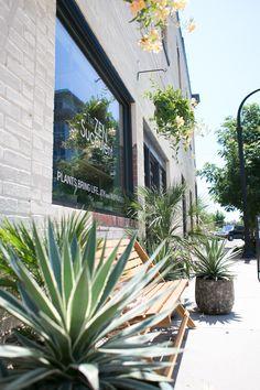The ZEN Succulent   Plant shop exterior