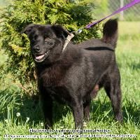 ★TO BE DESTROYED 11/30/14★Jodie~ Breed:Labrador Retriever Age: Adult Gender: Male Shelter Informations: Elizabethton Carter County Animal Shelter 135 Sycamore Shoals Dr  Elizabethton, TN Shelter dog ID: D2014545 Contacts: Phone: 423-547-6359 Name: April Jones email: animalshelter@cartercountytn.gov About Jodie:
