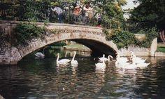 Kearsney Abbey and feeding the swans
