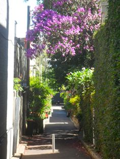 McElhone Place, Surry Hills, NSW, Arguably one of the cutest streets in Sydney, Australia