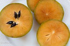 SAPOTI = Nativo da América Central, seu fruto é marrom e carnudo. É comum no Nordeste do País. É rico em vitaminas B, C, A e minerais como ferro, cálcio, magnésio e fósforo. Fortalece os ossos por ser fonte de cálcio. Já suas sementes têm propriedades diuréticas. Vlr. Calórico: 100 kcal/ 100 g. Deve ser consumida bem madura, quando seu sabor fica adocicado. Sources Of Iron, Exotic, Mango, Fruit, Amazon, Food, Minerals, Vitamins, Bones