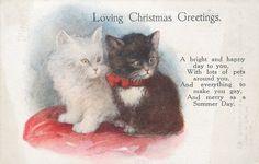 LOVING CHRISTMAS GREETINGS black and white kittens