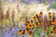 Millennium Park- Pensthorpe Nature Reserve.  Piet Oudolf, garden designer