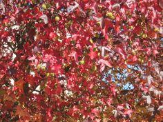 foglie nel parco