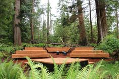 The Fircom Amphitheatre (nicknamed 'the sanctuary') is a design-build project born out of the camp's desire to bring life back to an overgrown forest clearing that was the historical site of Camp Fircom's chapel - a place for celebration and reflection.