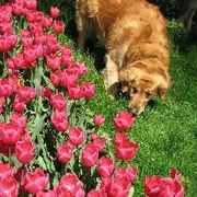 What Can You Put on Your Flower Beds to Keep Your Dog From Digging? | eHow
