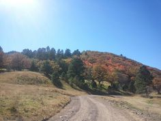 Fall colors on the Lincoln National Forest White Mtn Wilderness