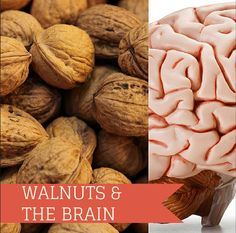 Walnuts are one of natures super foods! They enhance brain functions by developing more than 3 dozen neuro transmitters.