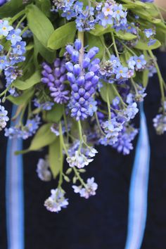 Muscari & forget me nots