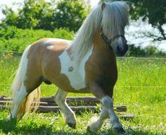 pretty pony stallion