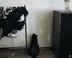 25 All Time Favorite Gifs