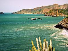 robinson crusoe, searching for a dog, bush and cacti, BIG BIRD behind me! OMG Isla de Margarita, Venezuela, South America Robinson Crusoe, Big Bird, Cacti, South America, Searching, Mountains, Water, Dogs, Travel