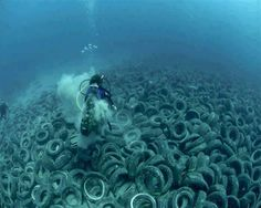 The ocean floor fail . . . . None of them have been successful. Steel restraints holding the tires of the Osborne Reef together have rusted away. When tropical storms come the tires careen across the ocean floor destroying marine life and damaging natural coral reefs along the way. This ecological catastrophe has gone unnoticed by the critical human eye for decades. Divers donating hours of time to remove the Garbage dump of tires!