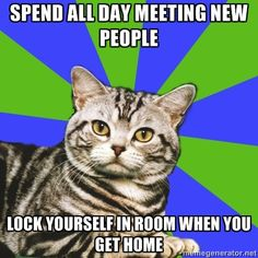 Introvert Cat: Spend all day meeting new people. Lock yourself in room when you get home.