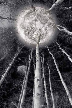 Full Moon + Winter + Barren Trees + Black and White + Photography~~Holding the Moon by Lars van de Goor~~ Moon Beauty, Shoot The Moon, Moon Pictures, Forest Pictures, Pretty Pictures, Moon Magic, Lunar Magic, Beautiful Moon, Simply Beautiful