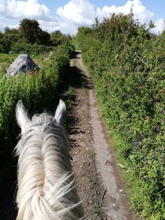 Horse riding vacations with Cooper's Hill Equine on the Wild Atlantic Way,West of Ireland. We organise hunting, trekking in the Burren, & beach riding. Horse Ears, Horse Riding, Trekking, Ireland, Hunting, Country Roads, Horses, Vacation, Beach