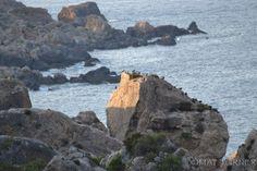 #Birds at Dahlet Qorrot #Gozo