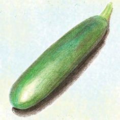 Zucchini Black Beauty at Bakers Creek Seeds