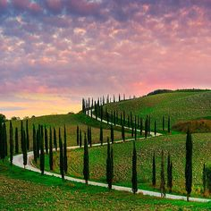 The stunning Tuscany trees of Italy at sunset