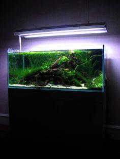 Mervent par Poups. #aquascaping #fishtank #aquarium