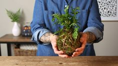 Kokedama Moss Gardens are a traditional Japanese garden that use moss as the container.